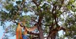 «A la Cime des arbres de Cayenne» de l'association Cimes A Gré