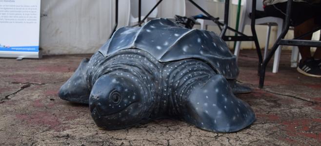 Lancement des tortues marines