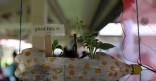 Inauguration Jardin partagé à l'école maternelle la Roseraie